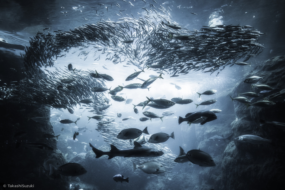 Fotokonst Underwater exploration