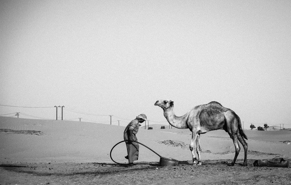 Fotokonst Camel Herder - I