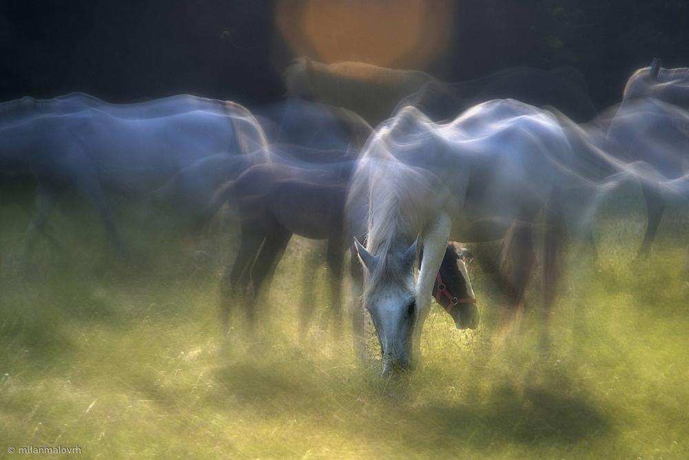 Fotokonst on the pasture