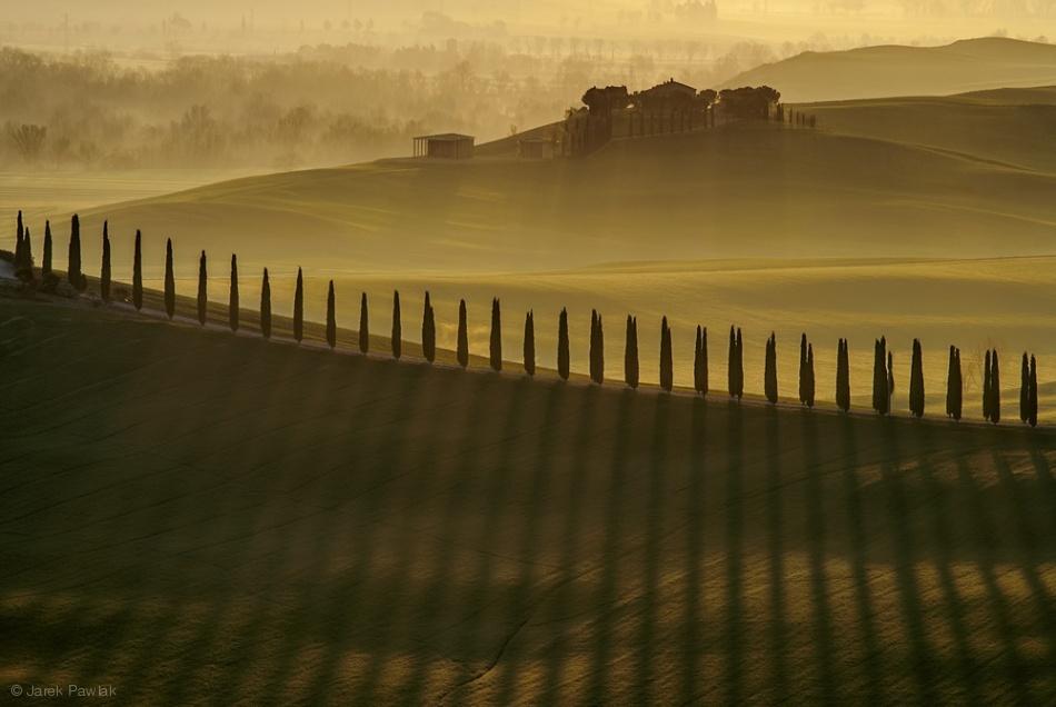 Fotokonst Cypress shadows