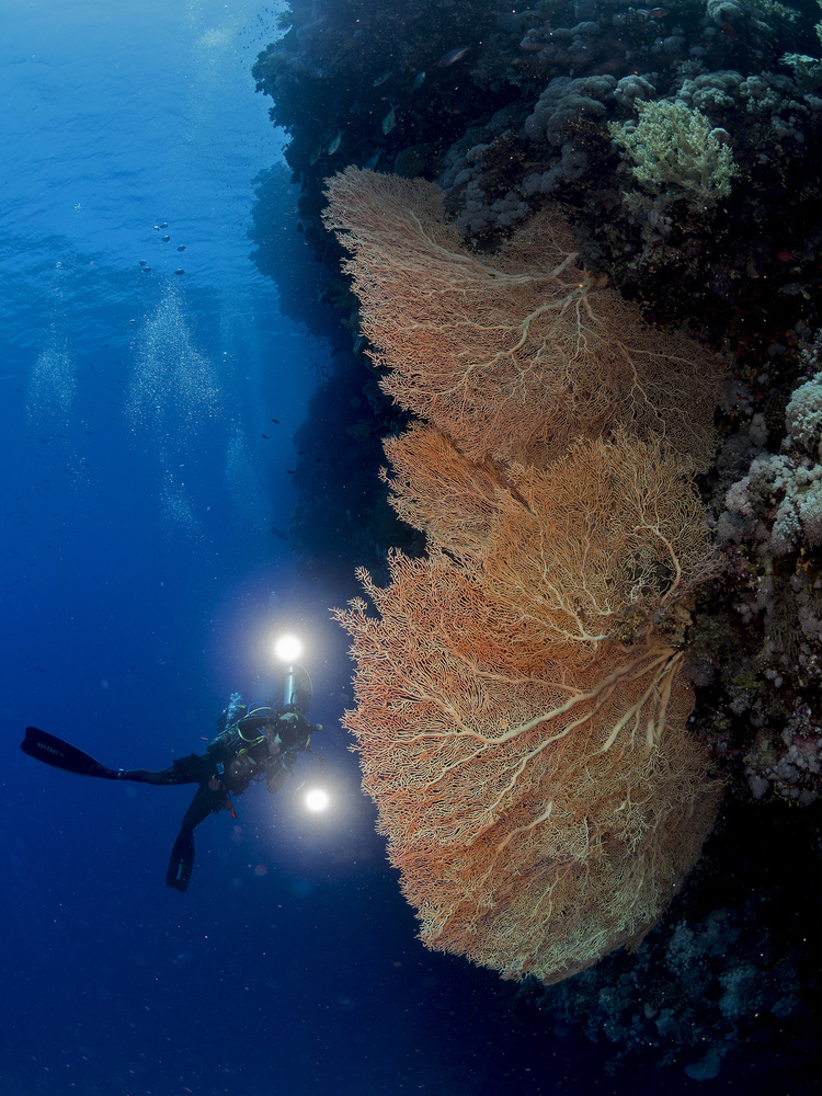 Fotokonst Gorgonian Coral and an Underwater photographer