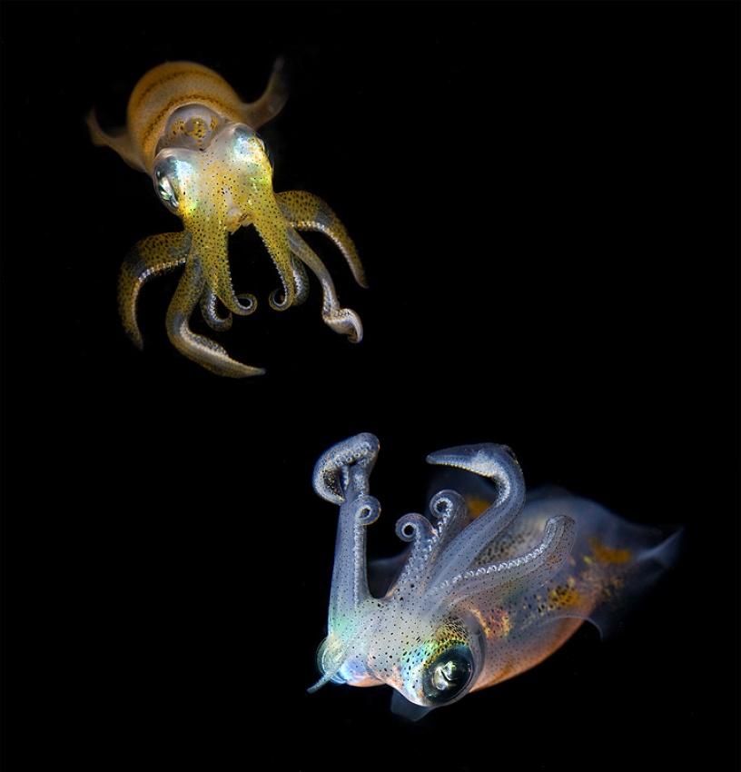 Fotokonst Sea Jewels