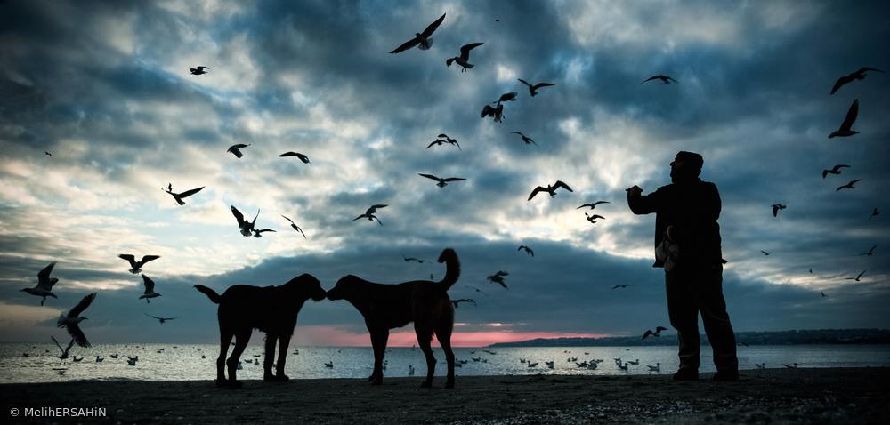 Fotokonst Animal Love