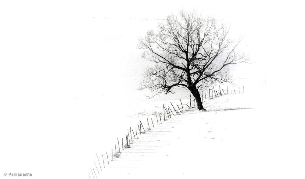 Fotokonst A single tree