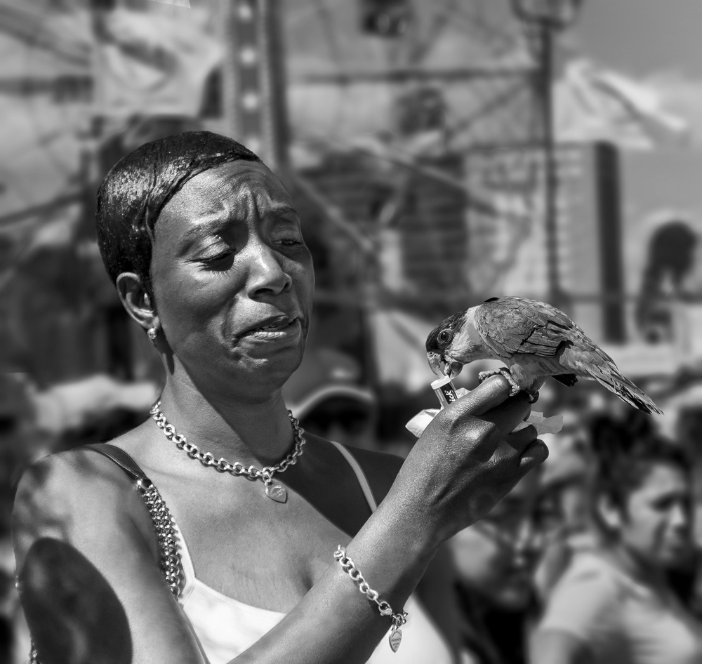 Fotokonst Coney Island Parrot