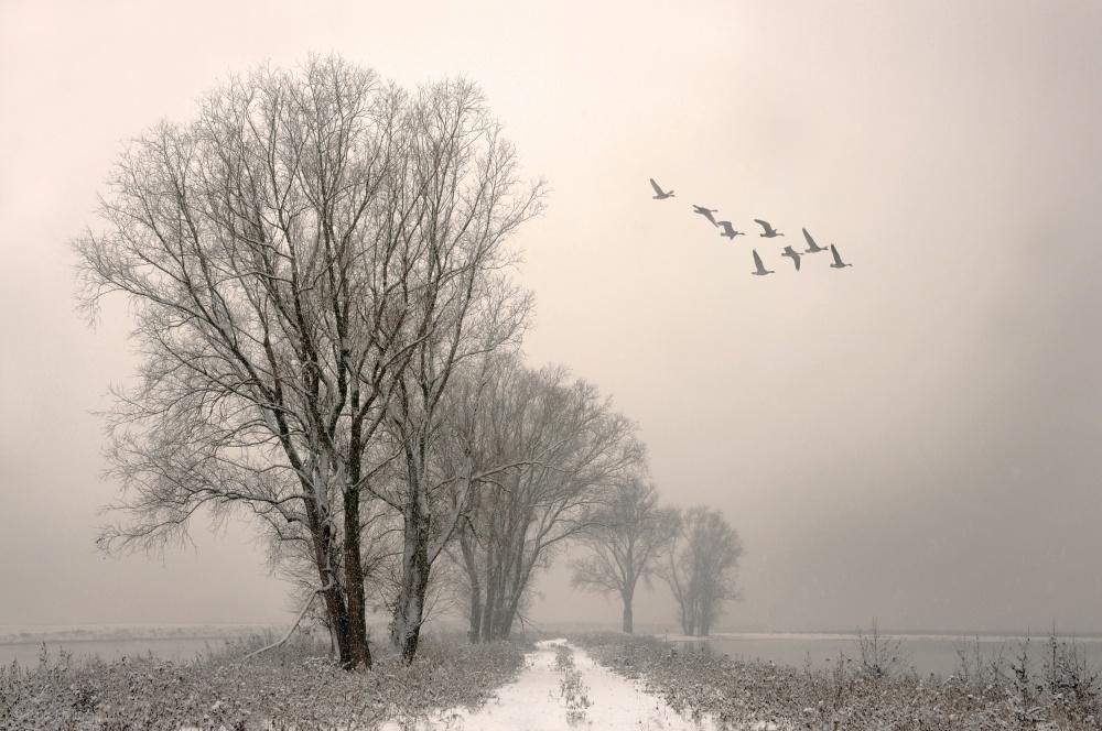 Poster Winterlight