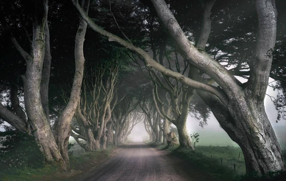 Fotokonst The Kings Road