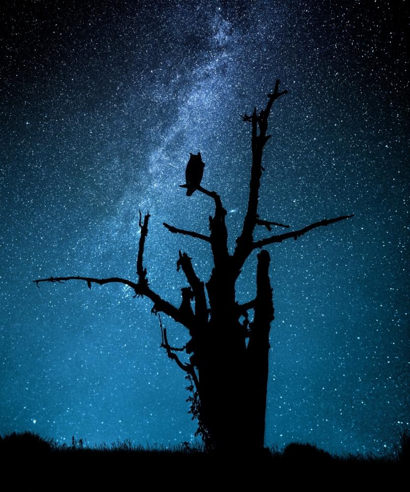 Poster Alone in the dark