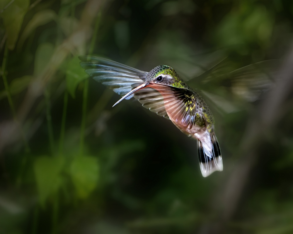 Something you have to know when photographing 'Hummingbirds'