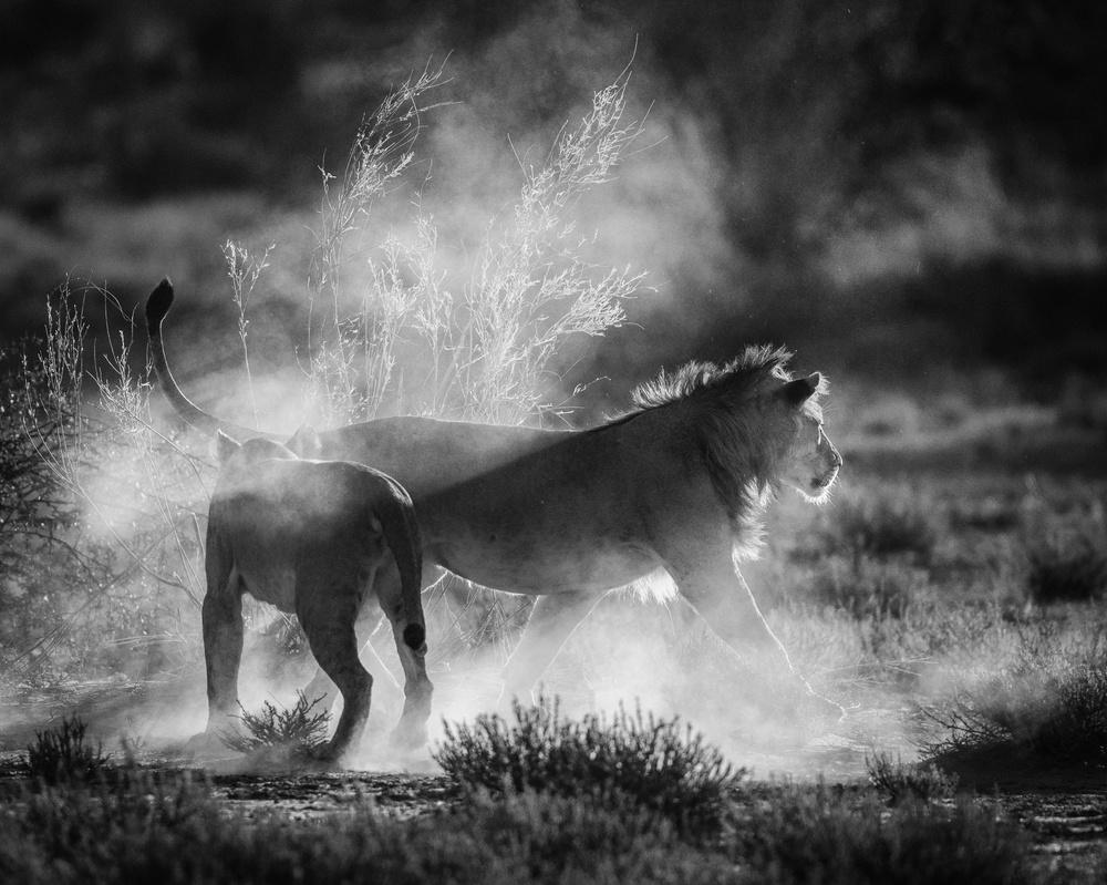 Fotokonst Dust Cats