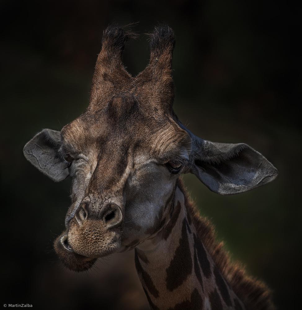 Fotokonst Giraffe