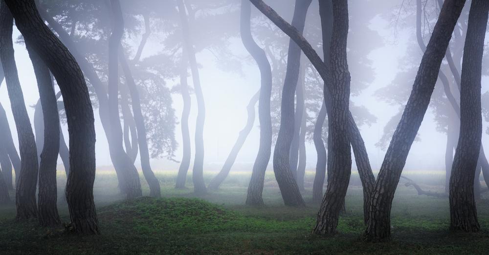 Fotokonst Into the Mist