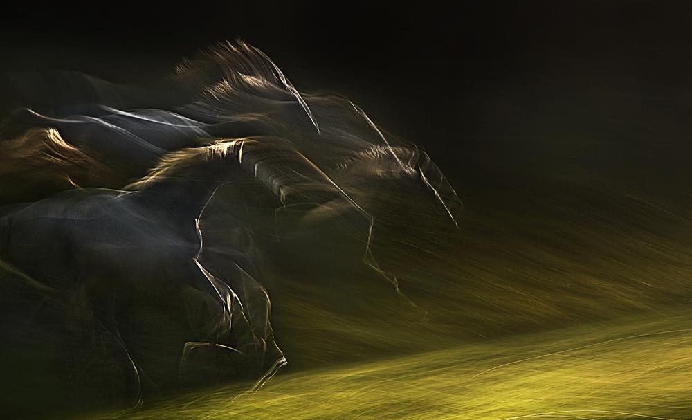 Fotokonst horsepower