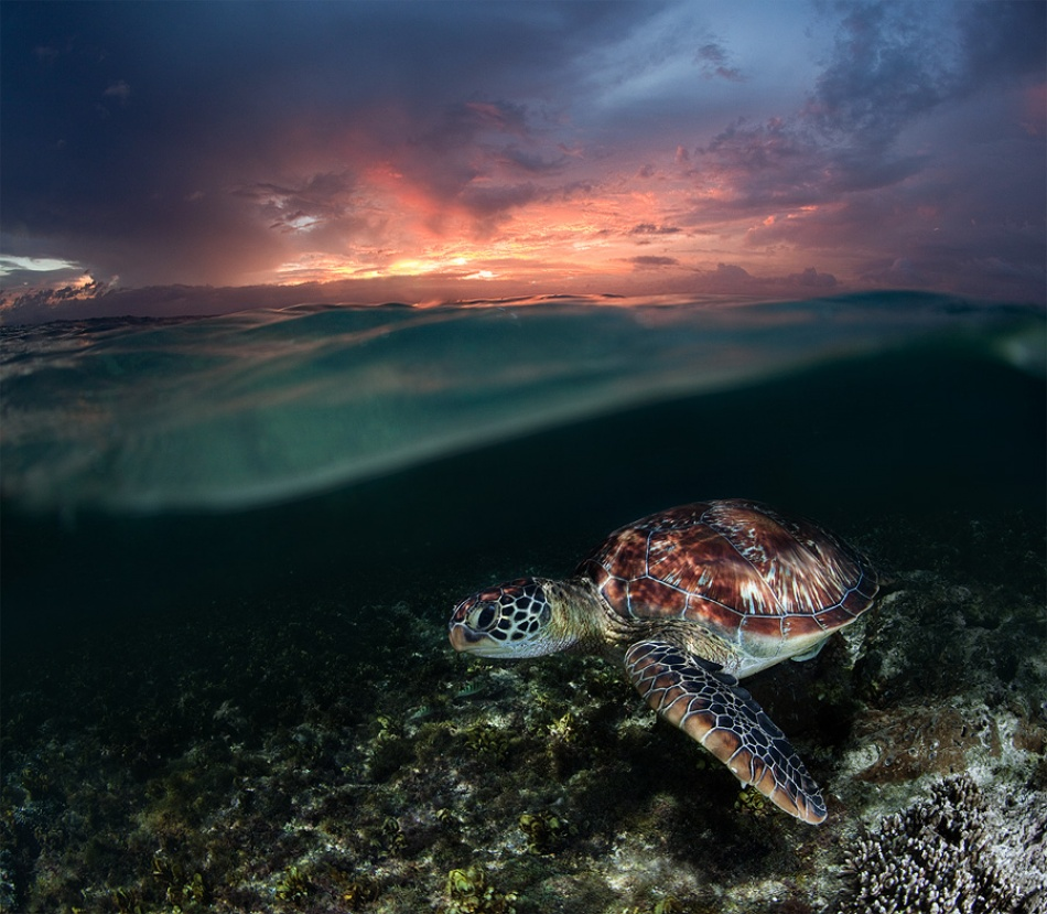 Fotokonst Sunset swim