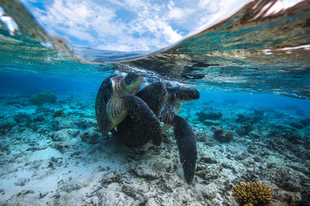 Fotokonst Turtle Coupling