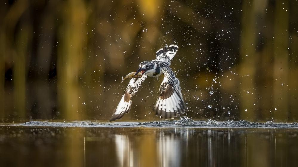 Fotokonst Happy Wings