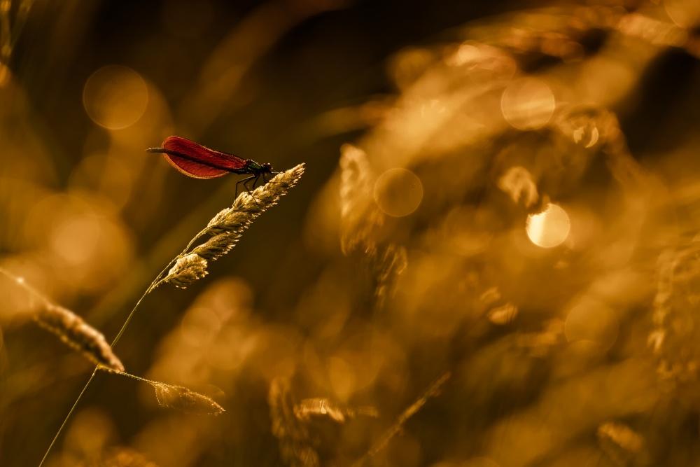 Fotokonst Jason et le mythe de la toison d'or