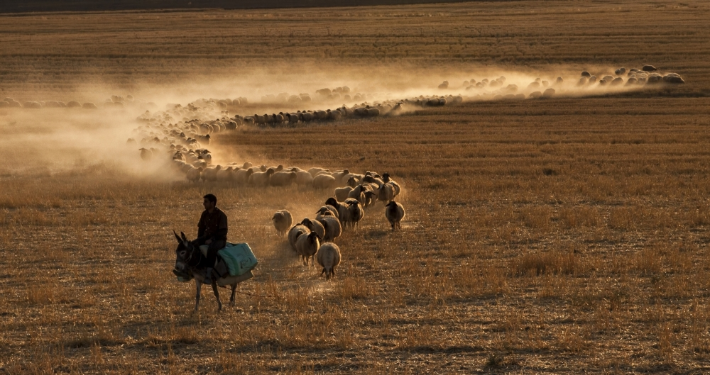 The colours of transhumance