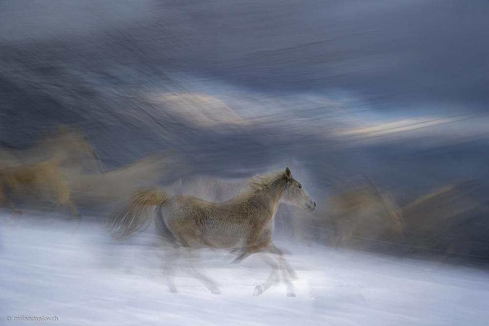 Fotokonst Gallop in the Snow