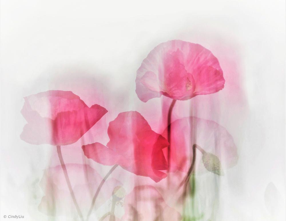 Fotokonst Flowers