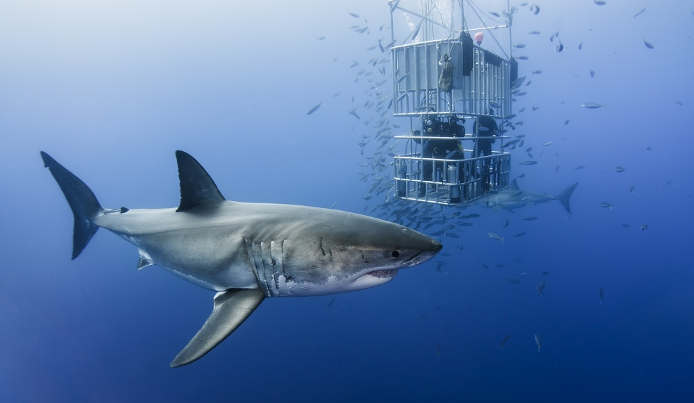 Fotokonst Animals in cage