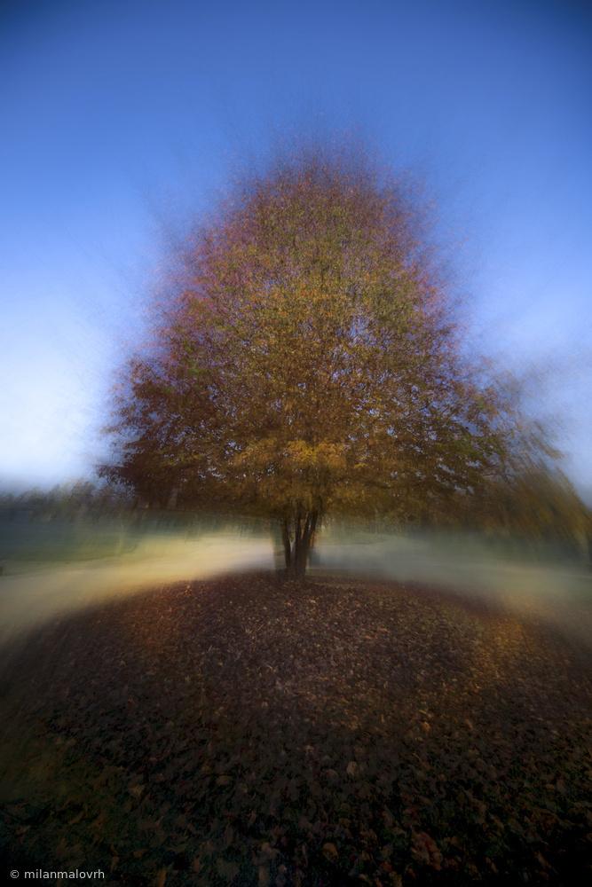 Fotokonst mystical  tree