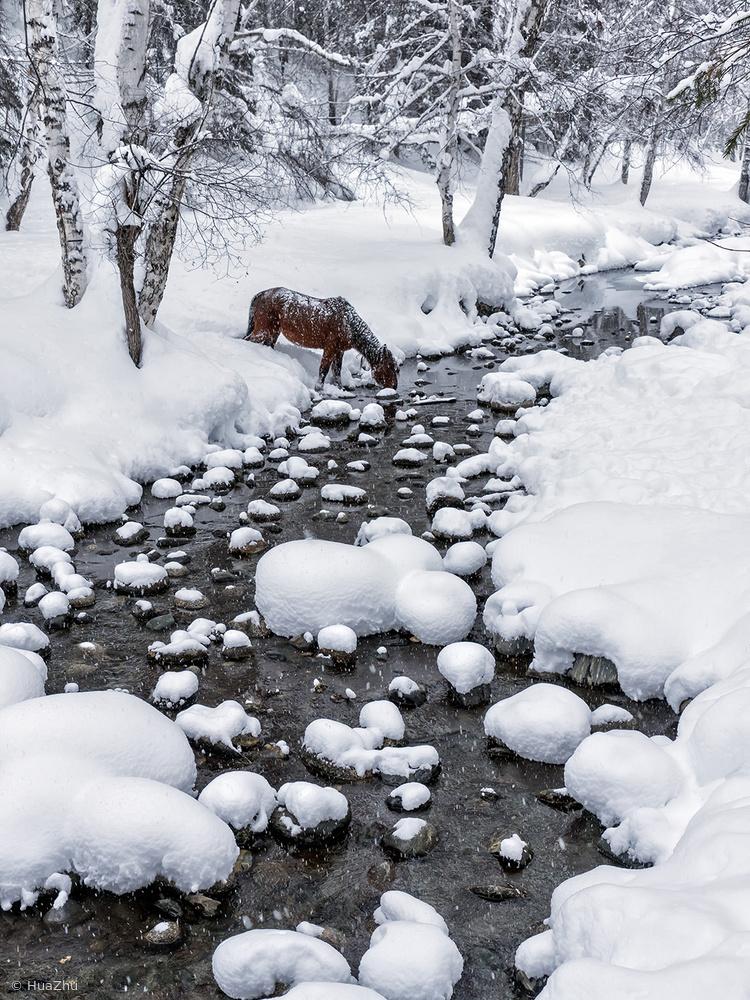 Fotokonst Drinking in snow