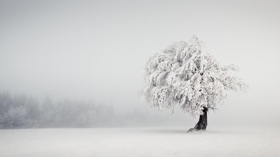 Fotokonst Silence