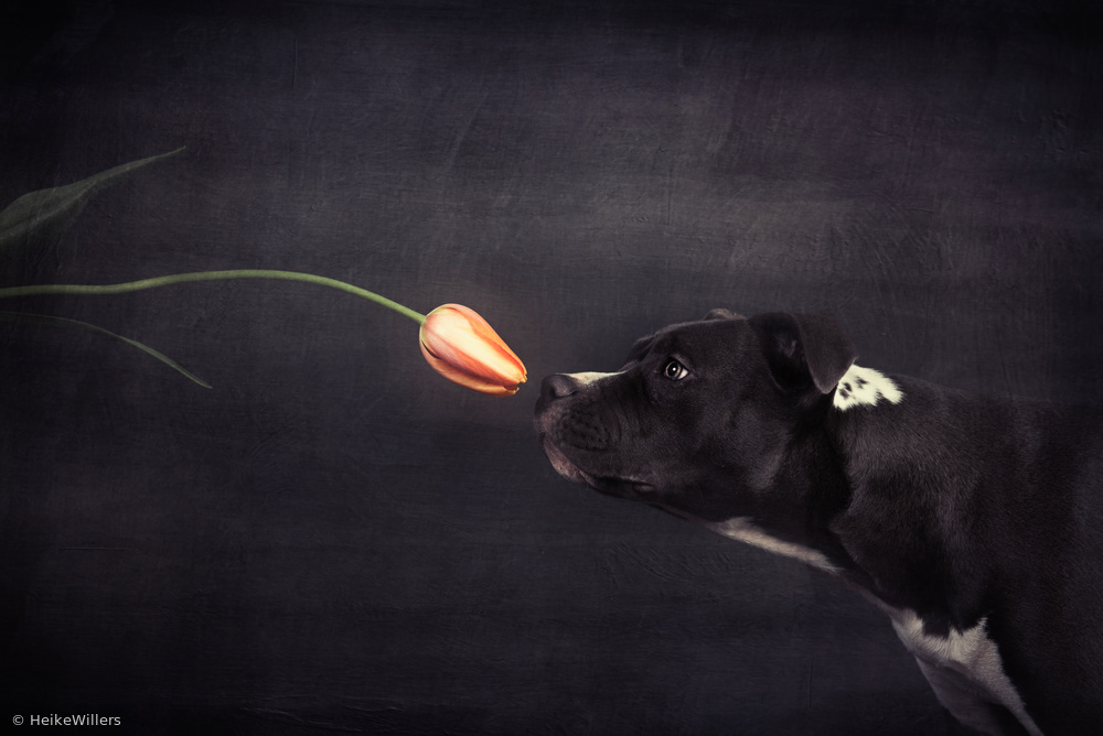 Fotokonst First approach - Hildegard and the tulip