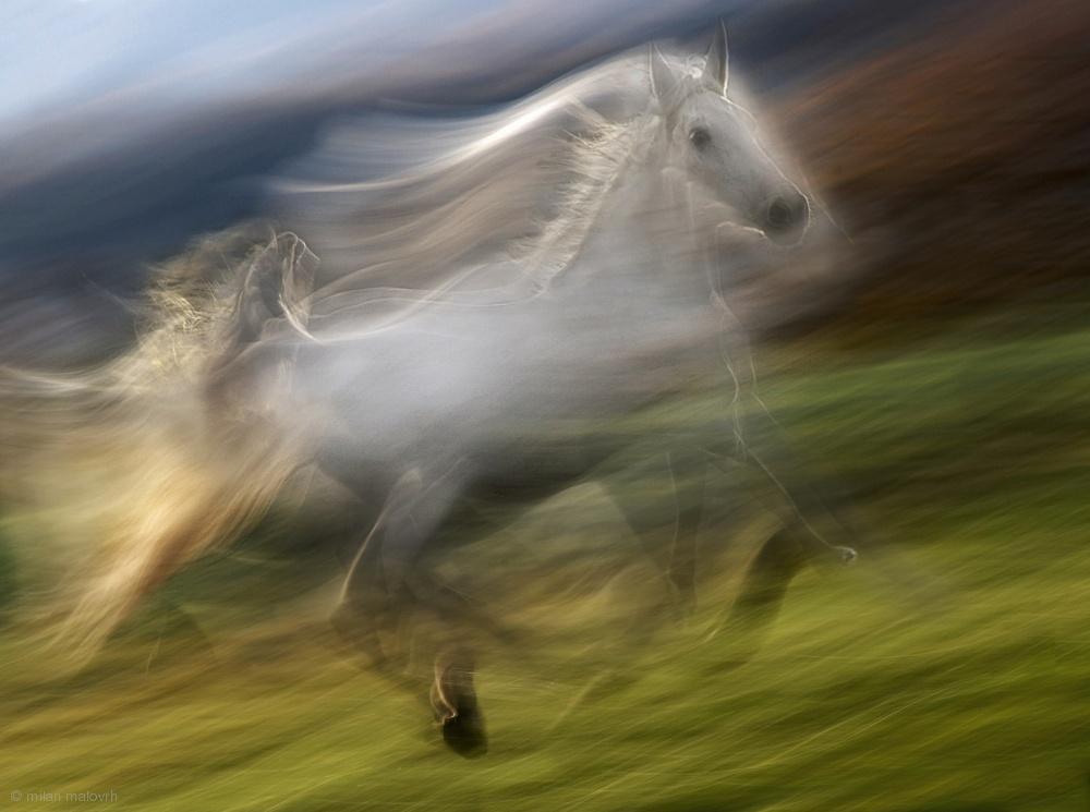 Fotokonst gallop in the wind