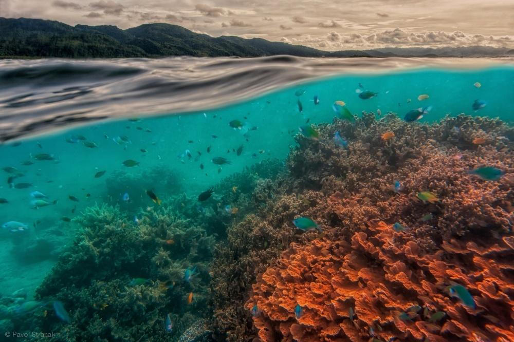 Fotokonst uri marine reserve