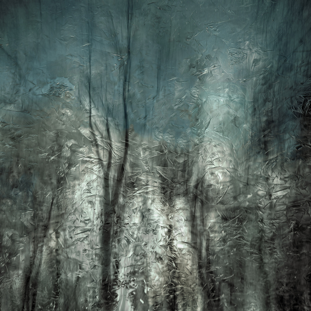 Poster frozen frost wood
