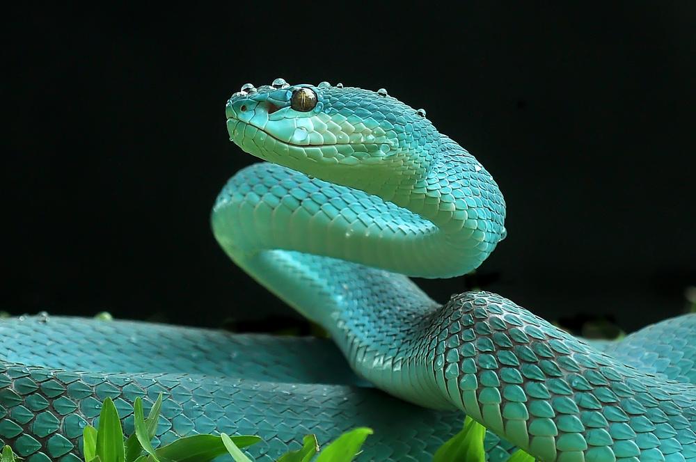 Fotokonst The Viper