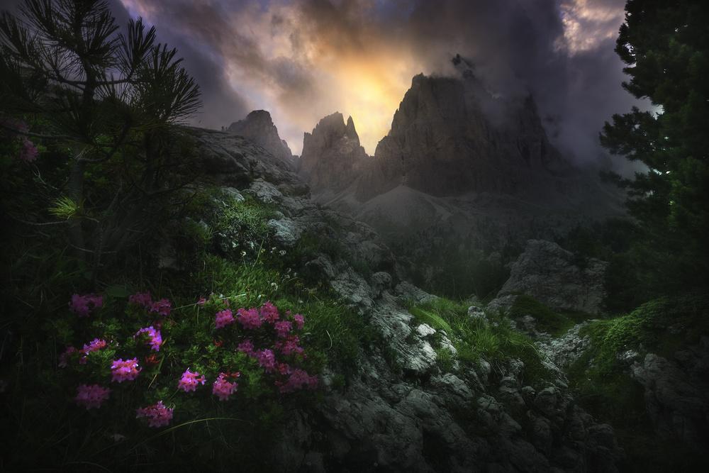 Fotokonst Garden Of Eden #2