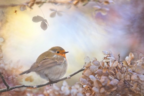 Robin on dreams by Teuni