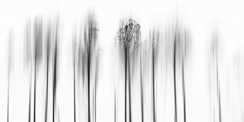 Leave Winter Behind by paulo abrantes