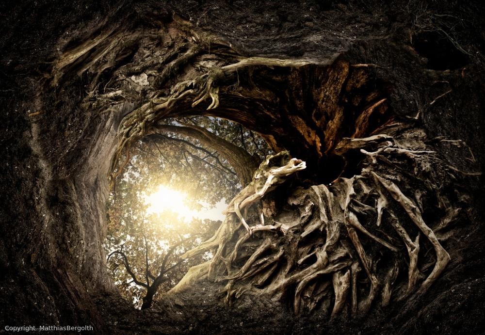 Fotokonst Under The Trees #1