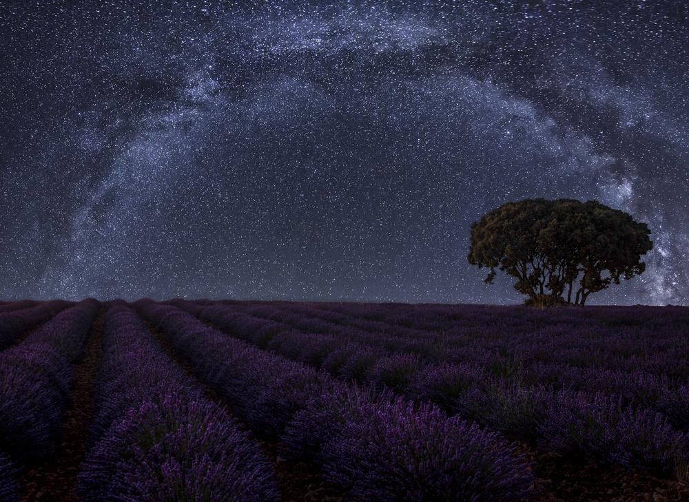 Fotokonst Lavender in Brihuega