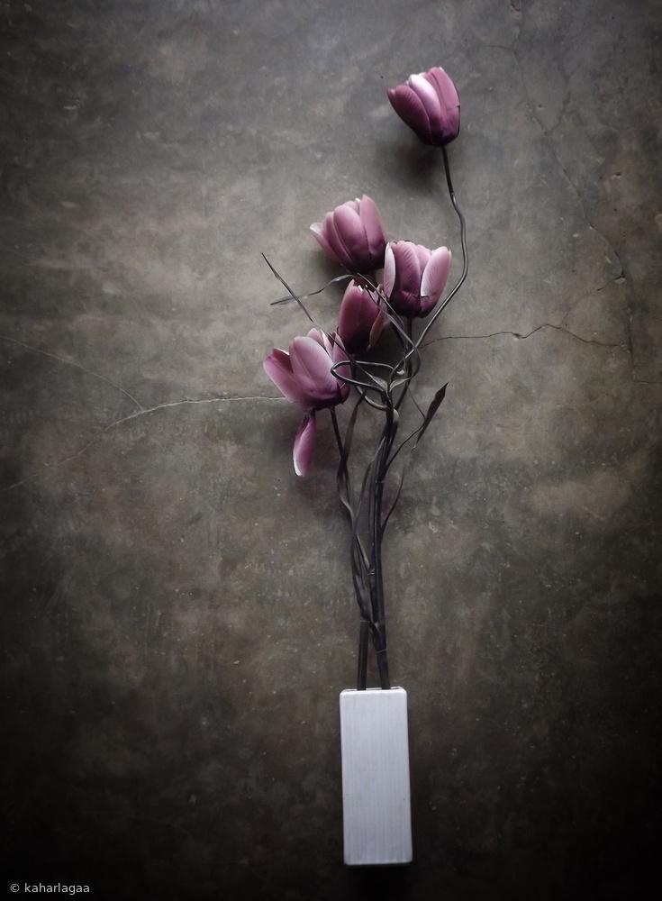 Fotokonst The Purple Tulip
