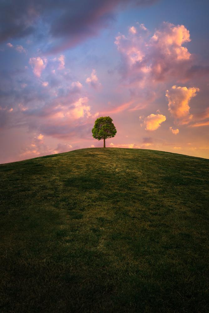 Fotokonst That lonely tree