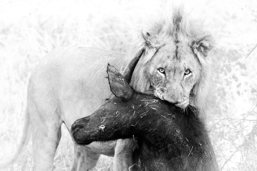Poster Poor Buffalo