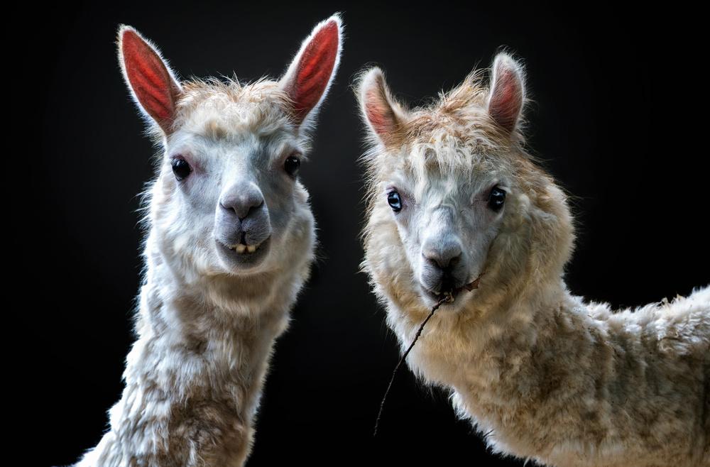 Fotokonst Peruvian Beauties
