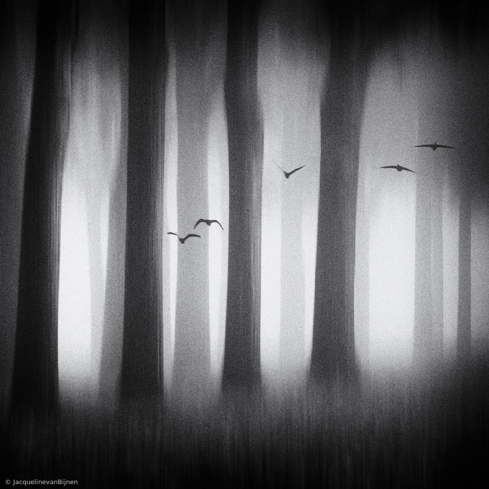 Fotokonst Between the trees