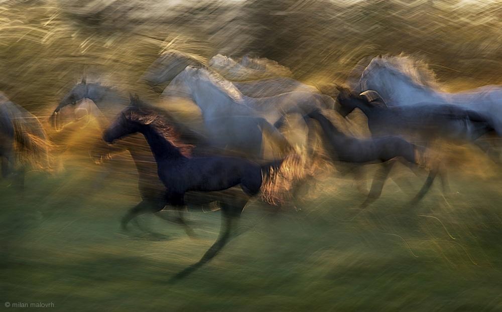 Fotokonst fiery gallop