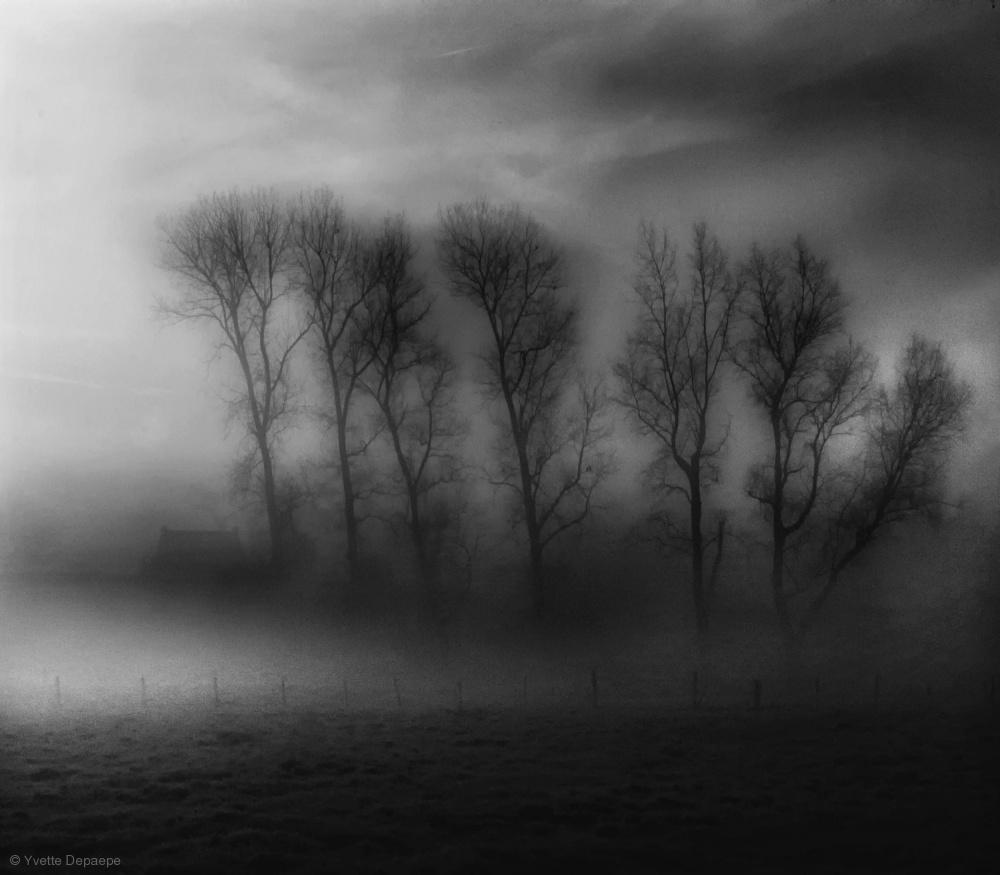 Fotokonst 50 Shades of Fog