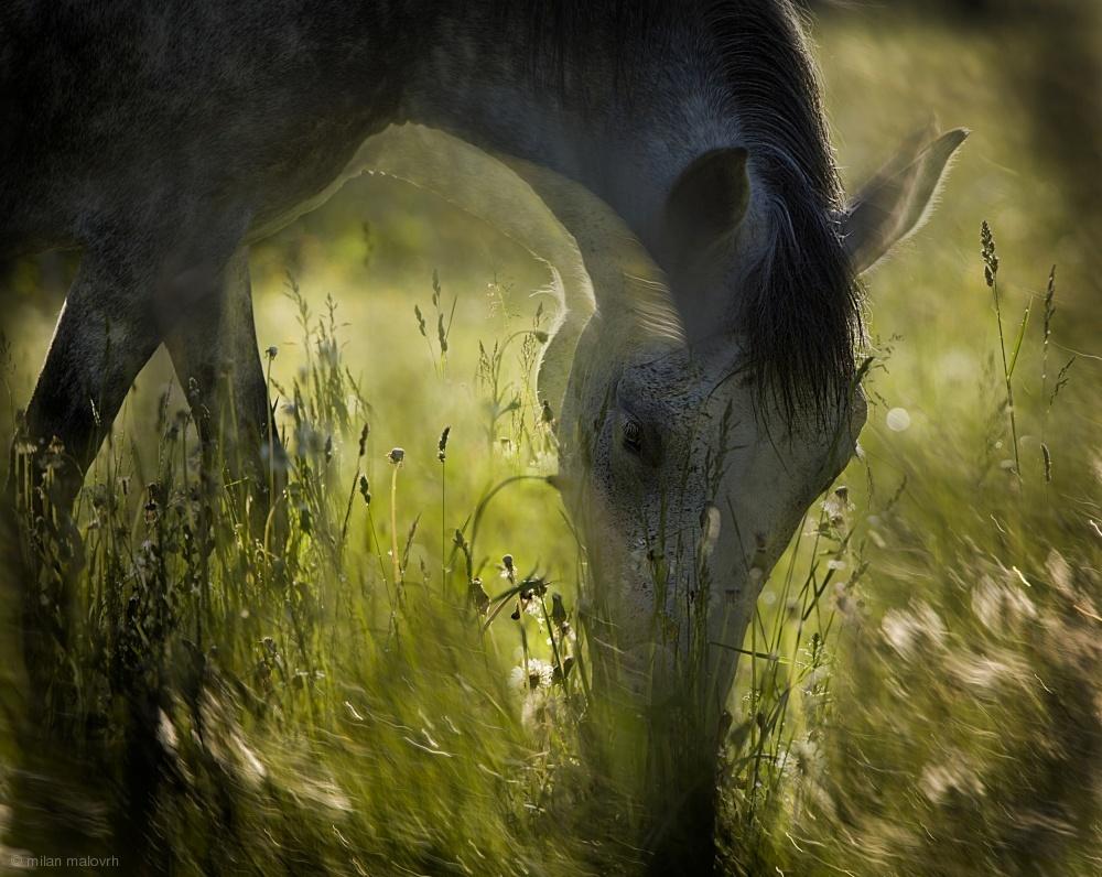 Fotokonst on pasturage