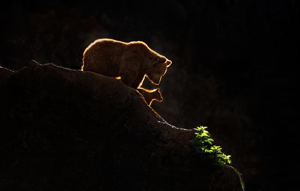 Fotokonst Mom bear with cub