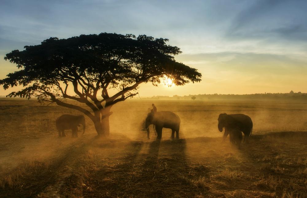 Fotokonst Morning elephant home town