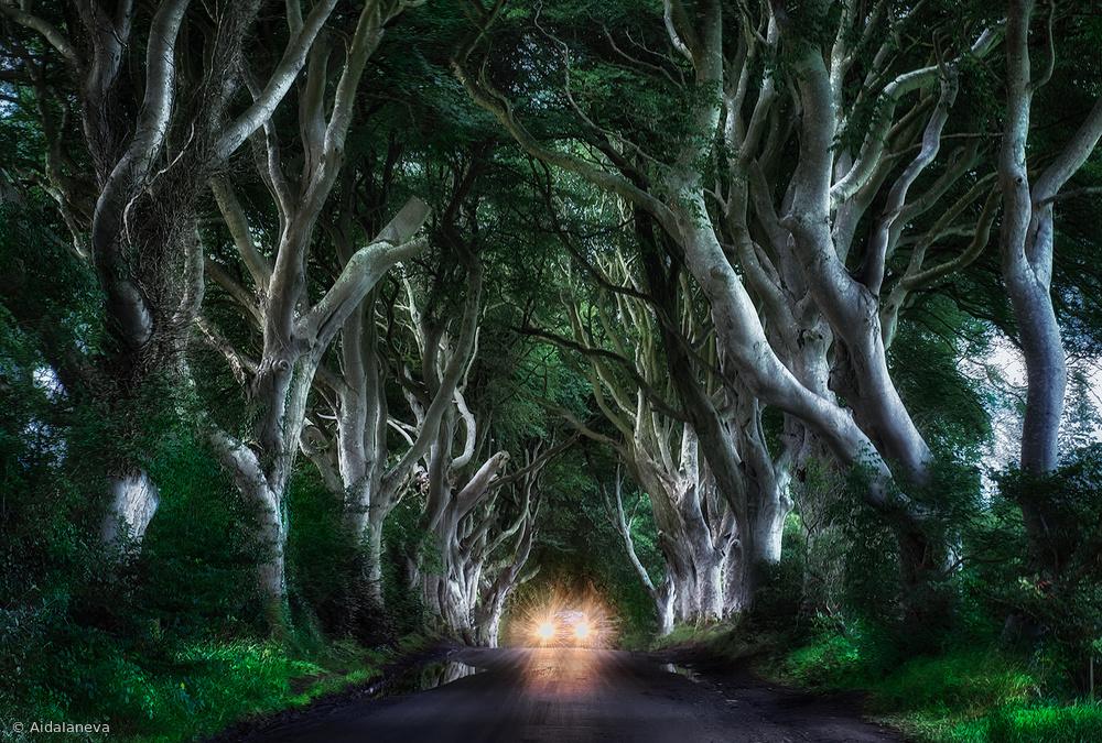 Fotokonst The Dark hedges