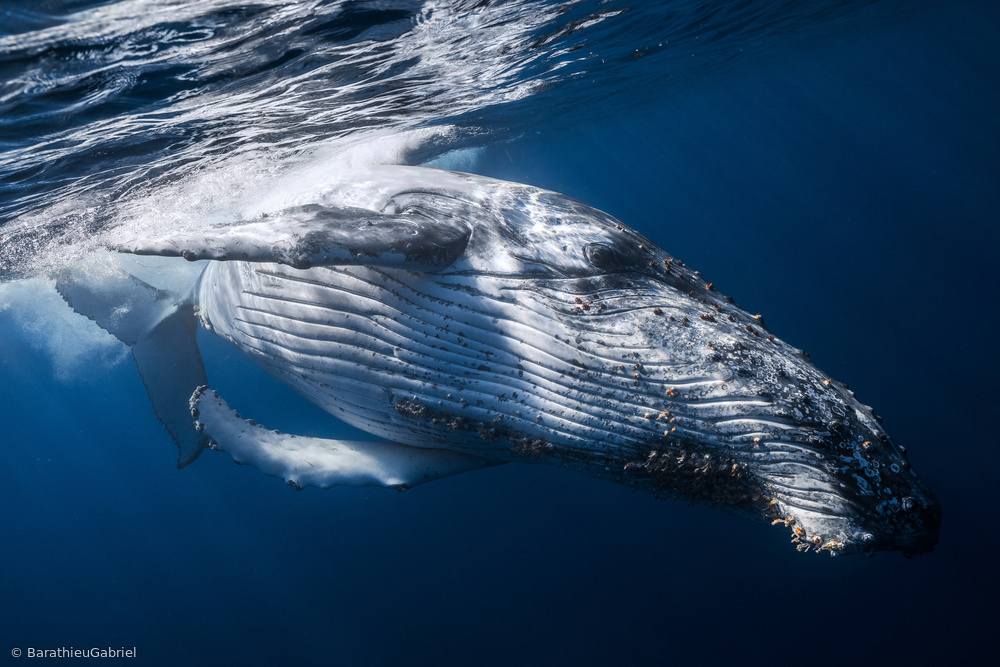 Fotokonst The Whale